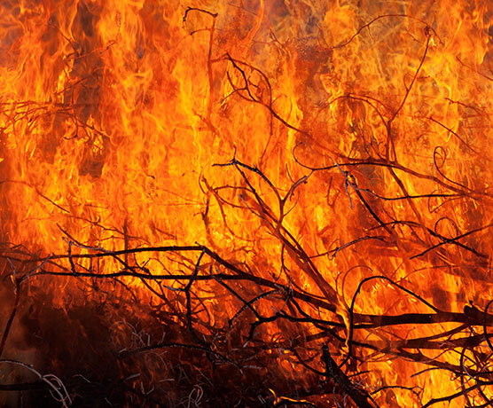 Close-up of fire in weeds and branches