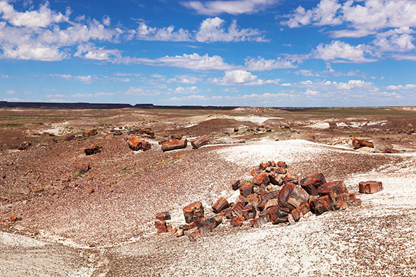 Petrified Logs in Crystal Forest, Petrified Forest National Park, Arizona