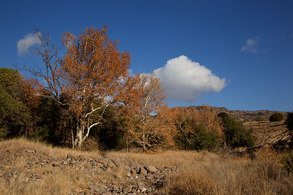 Fall Colors along Juan Miller Road, Apache National Forest, Arizona